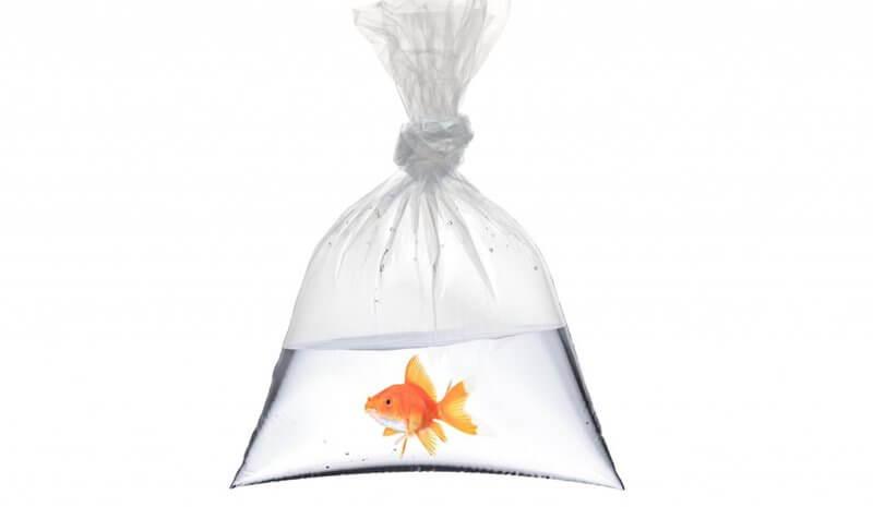 Mudanzas con peces y plantas acuaticas